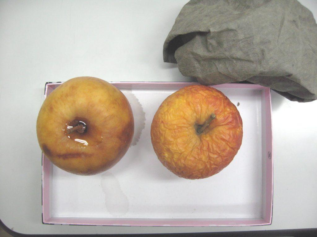 麻炭ペーパー 実験例