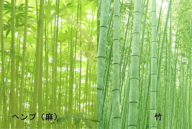 麻(ヘンプ)と竹(バンブーレーヨン)を比較する.. – 麻福ヘンプ情報局