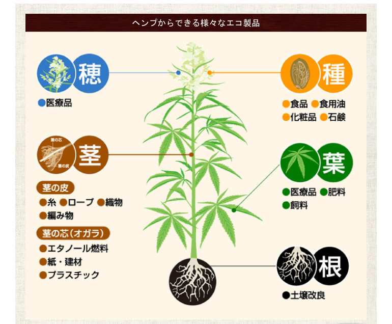 hemp_nyumon_05
